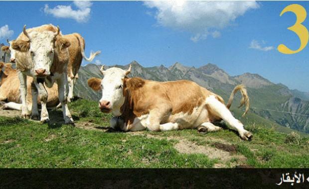 تعرف على الحيوانات الأكثر ذكاء في العالم بالصور 3.jpg