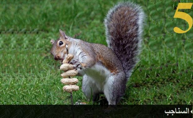 تعرف على الحيوانات الأكثر ذكاء في العالم بالصور 5.jpg