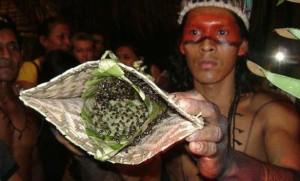قبيلة تلدغ شبابها بالنمل كاختبار للرجولة large.jpg