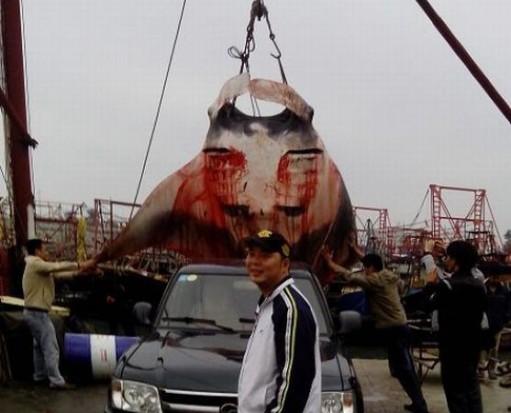 اصطياد اكبر شيطان بحر في العالم F4