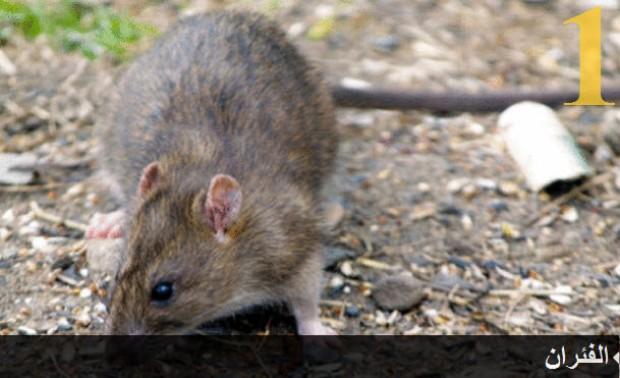 تعرف على الحيوانات الأكثر ذكاء في العالم بالصور 1.jpg